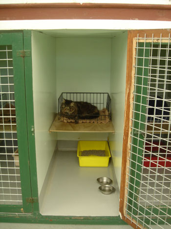 Information Seaview Cattery Seaview Cattery